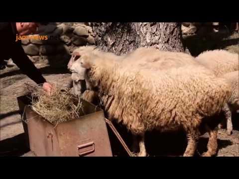 Laidge people, Georgia, May 2017, subtitled into Azerbaijani