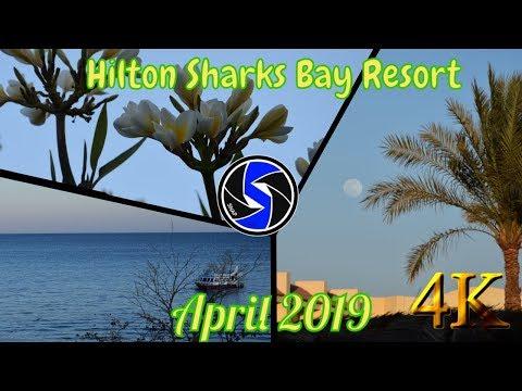 Sharm El Sheikh, Egypt 2019   Hotel Hilton Sharks Bay Resort 4*