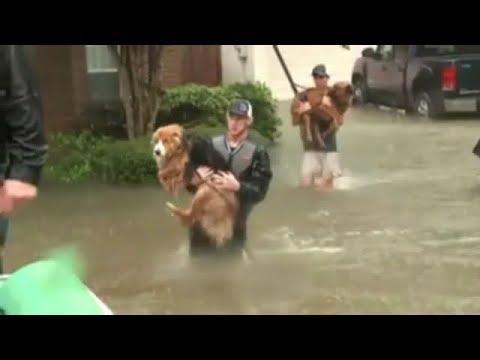 People saving pets From the Floods in Houston Texas #Prayforhouston
