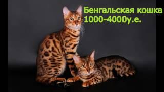 Топ 15 дорогих редких кошек в мире