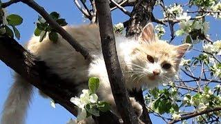 Смешные кошки. Жизнь в природе. Жизнь в деревне.