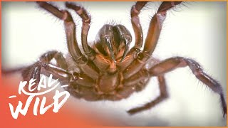 Why Are Australia's Predators So Deadly? (Wildlife Documentary) | Deadly Australia | Real Wild