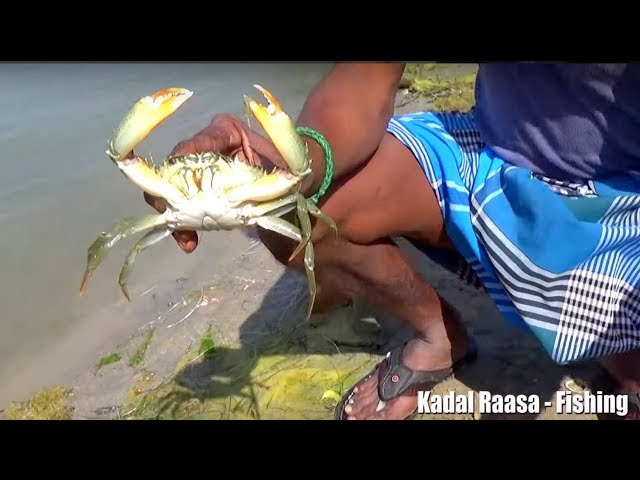 Unique Mud Crabs Trapping System | New Technique Of Mud Crabs Catching