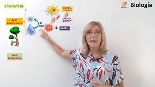 Biología: Fotosíntesis - 3 (17/04/2019)