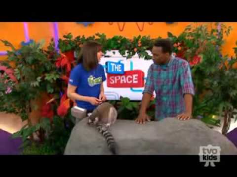 Stewie the Lemur Visits TVOKids