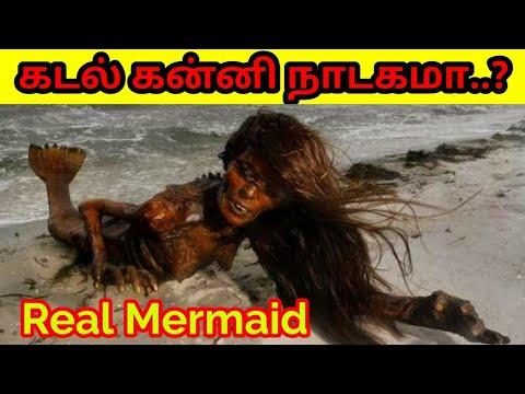 Download Real mermaid cought in Srilanka|Trending No1|கடல் கன்னி இருக்கா இல்லையா ஆதாரங்கள் தமிழில்|Tamil