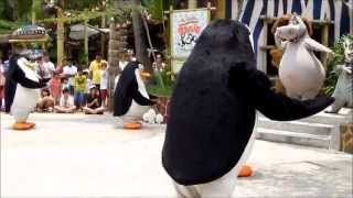 funny madagascar penguin freezes during the dance (Universal Studio)