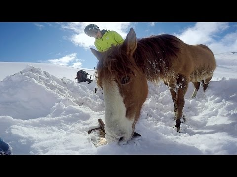 GoPro: Chilean Horse Rescue