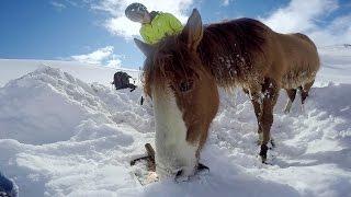 GoPro: Chilean Horse Rescue thumbnail