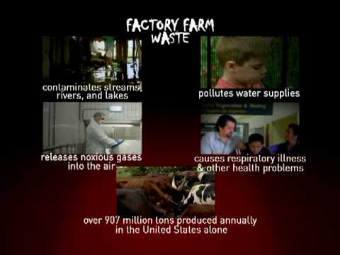 Factory Farm Pollution: A Critical Pollution Problem