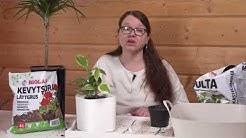 Huonekasvit altakasteluruukuissa