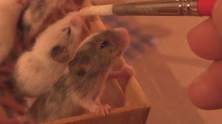 Cute Baby Mice, night time feeding
