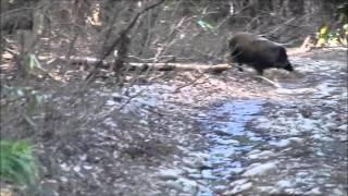 泉ヶ岳の林道でバッタリ!5~6頭のファミリー連れ 一旦家族を移動させて...