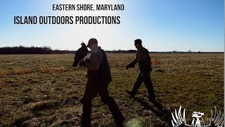 """2014 """"Wolves of the Sky"""" Falconry Hunt (Eastern Shore,MD)"""