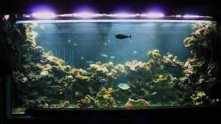 Обслуживание аквариума(Любая искусственная система (аквариум, террариум, оранжерея, черепашатник) нуждается в регулярном контроле..., 2014-01-13T11:44:05.000Z)
