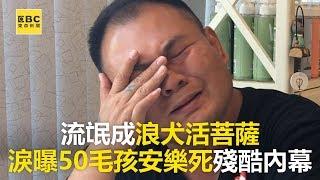 【良心救浪浪】流氓成浪犬活菩薩 淚曝50毛孩安樂死殘酷內幕