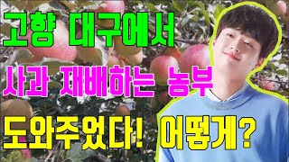 핫! 단독! 이찬원, 대구에서 사과를 재배하는 농부들을…