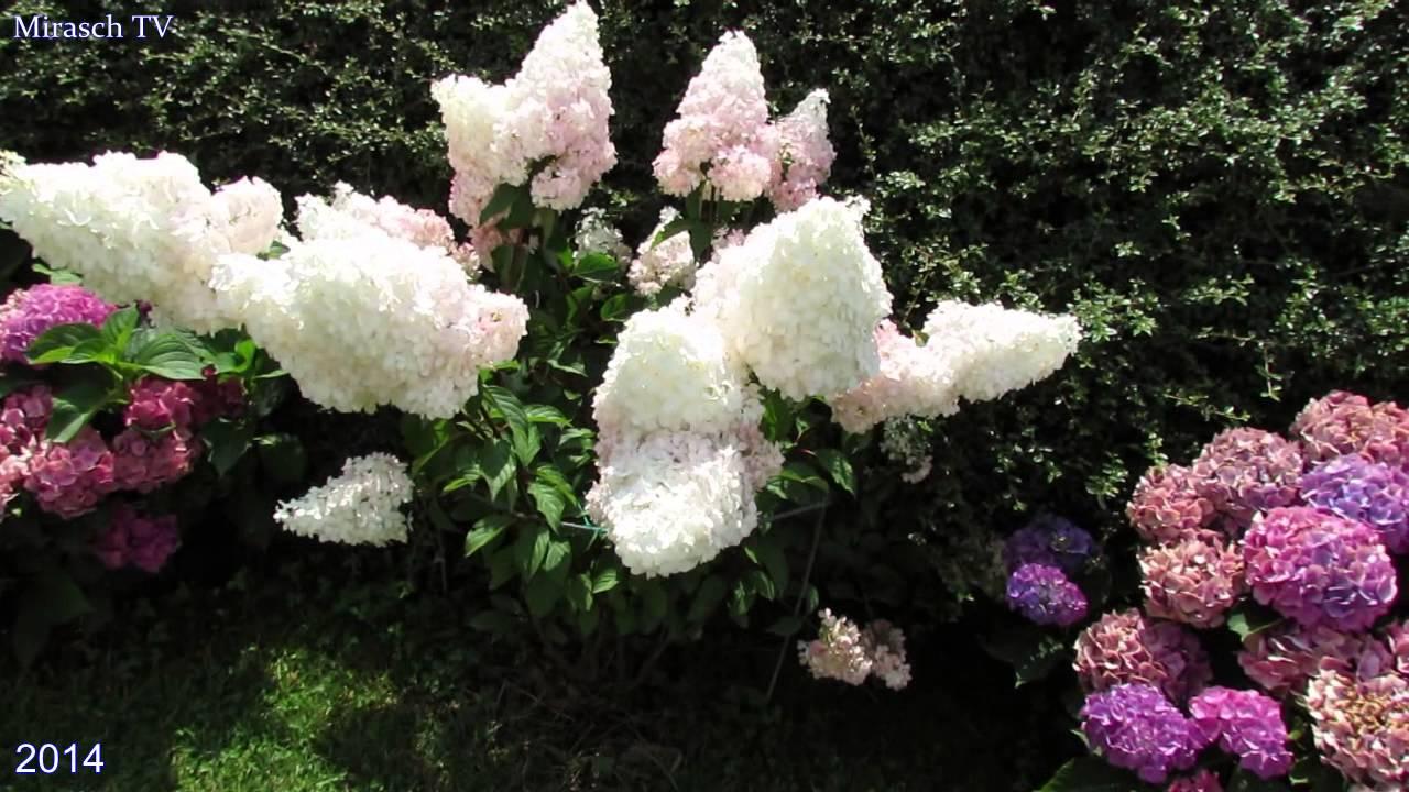 Каталог с фото многолетних цветов в саду