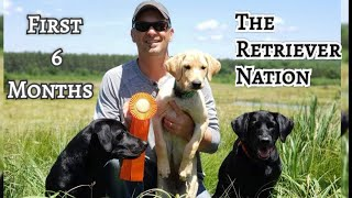 The First 6 Months With Your Retriever Puppy ~Introducing Water, Birds, Whistle Sit and More ~TRN