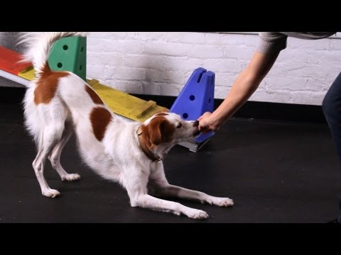 Teach Your Dog to Take a Bow, Part 1 | Dog Tricks
