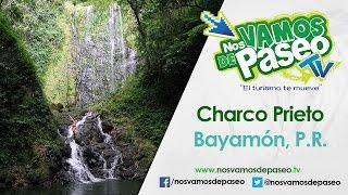 Charco Prieto, Bayamon, P.R.