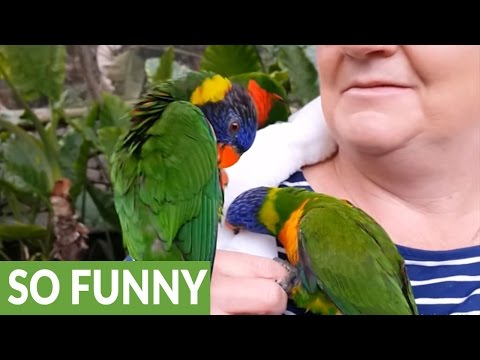 Birds defend lady after she's bitten