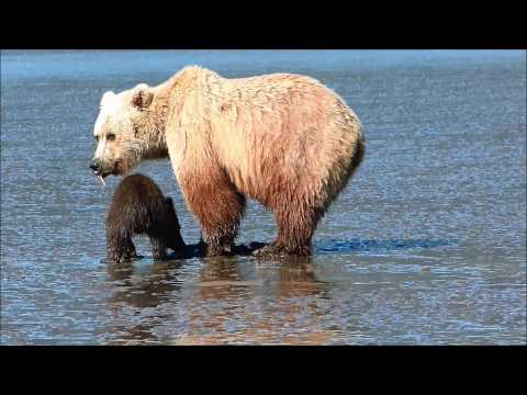 Clamming with the Bears
