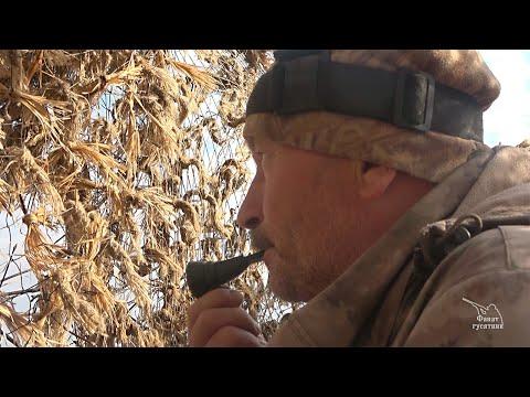 Охота на селезня с подсадными утками на Оке. Рязань, весна 2019