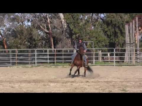 FOR SALE: Saltriver Proof (Australian Stock Horse)