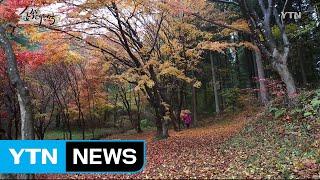 숲속의 대한민국 3회  / YTN
