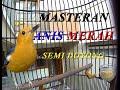 Masteran Anis Merah Ngalas(.mp3 .mp4) Mp3 - Mp4 Download