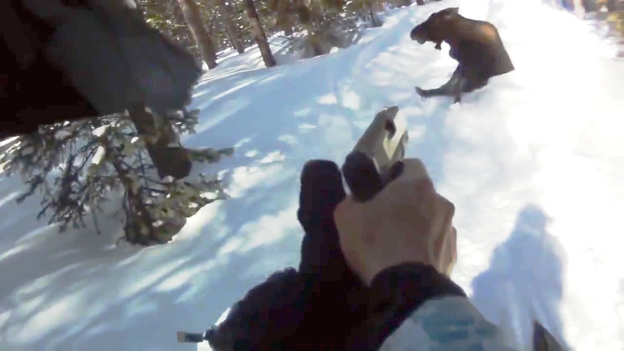 Angry Moose Fatal shoot