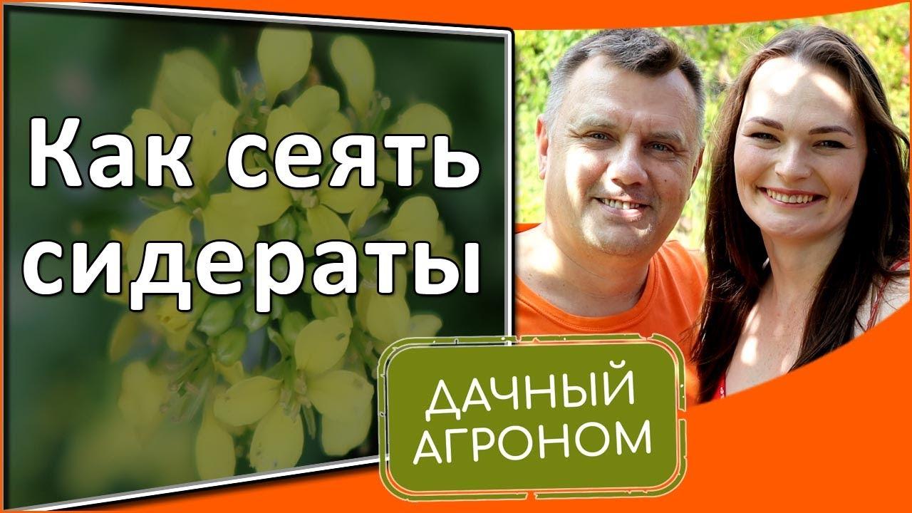 Как сеять сидераты осенью весной летом Сидераты в огороде и успешное садоводство