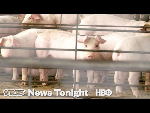 Why North Carolina Can't Solve Its Hog Poop Problem (HBO)