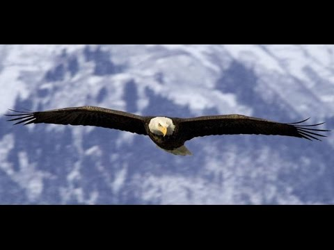 Image result for eagles ABOVE THE CLOUDS