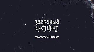 «Звериный инстинкт» с Ириной Притулой. Как общаются друг с другом животные? TVK 31.10.16