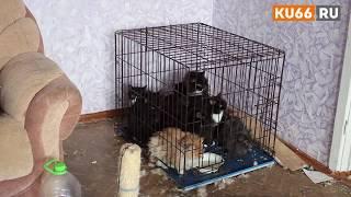 Труп кошки и голодных животных обнаружили в заброшенной квартире