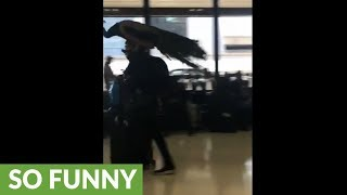 """Woman tries to bring """"emotional support"""" peacock onto plane"""