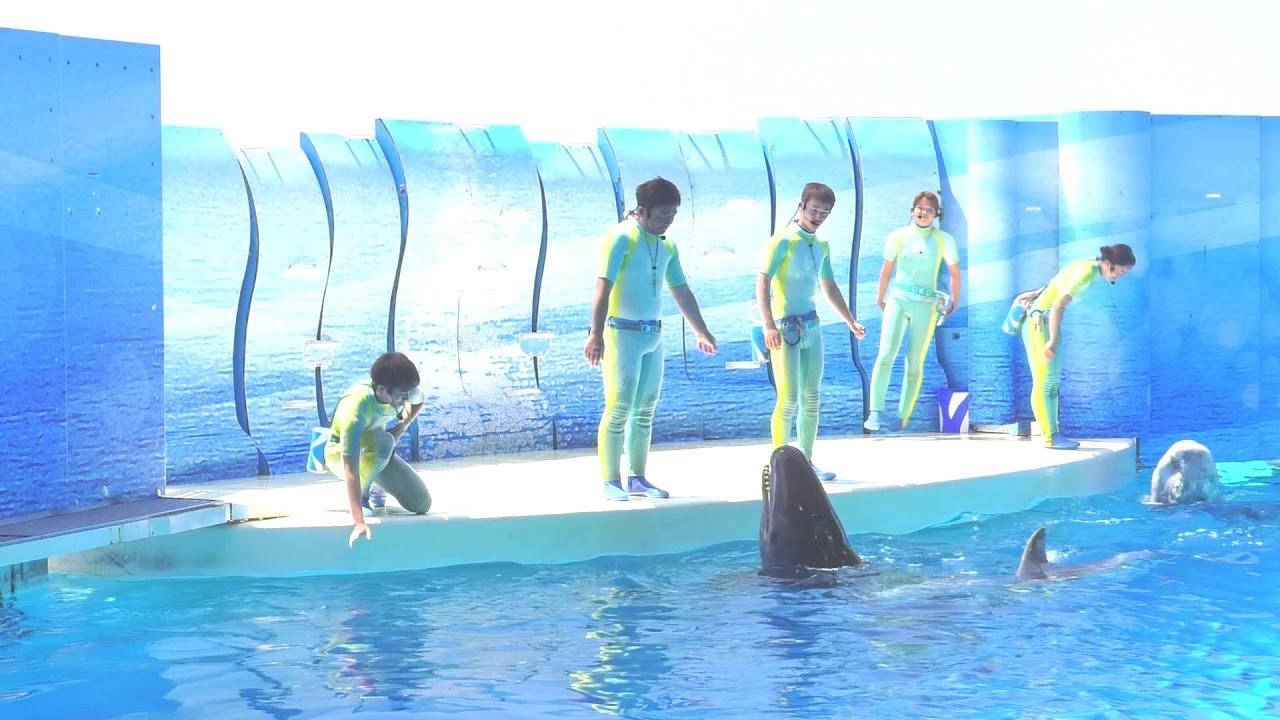 えのすい きずな(2018.04.22)12:00~ 【新江ノ島水族館】 - YouTube