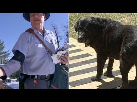 This Mailman Noticed How His Favorite Dog Was Changing  Then He Saw What The Owners Were Doing