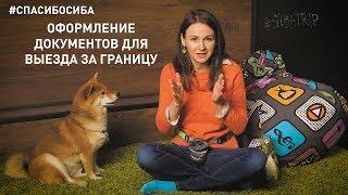 #СПАСИБОСИБА: Как оформить документы для выезда за границу с собакой