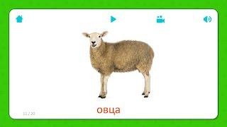 Овца - Карточки Для Детей - Домашние Животные - Карточки Домана