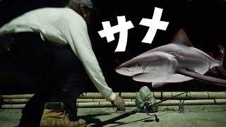 #3 夜の港で釣りをしていたらまさかのサメが現れた!!!【離島サバイバル】