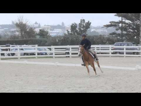 Horse Jumping Show Bermuda January 29 2012