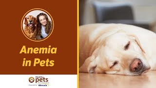 Dr. Becker Discusses Anemia in Pets