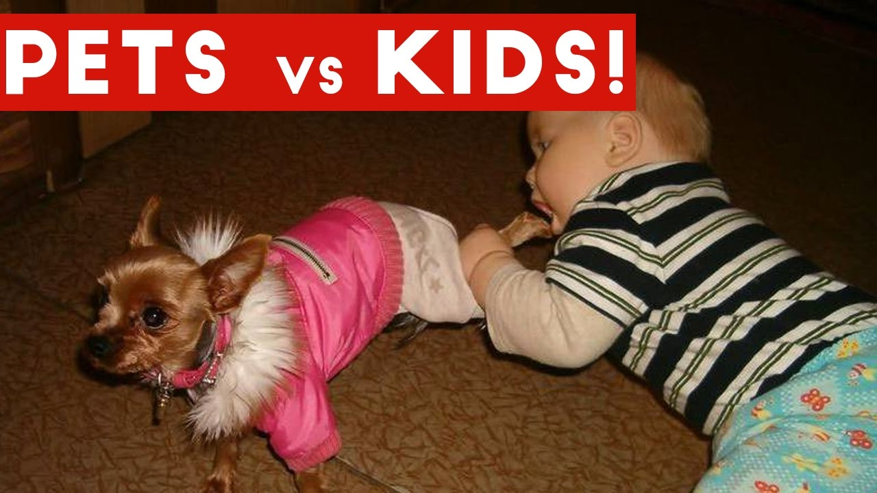 Uncategorized Funny Pet Videos For Kids funniest pets vs kids video compilation december 2016 funny pet videos youtube