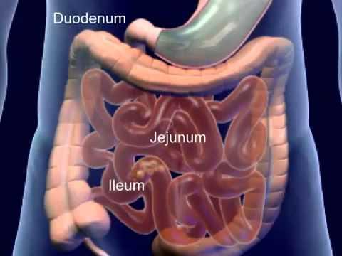 Cơ thể học - Hệ tiêu hóa (The human body - Digestive system)