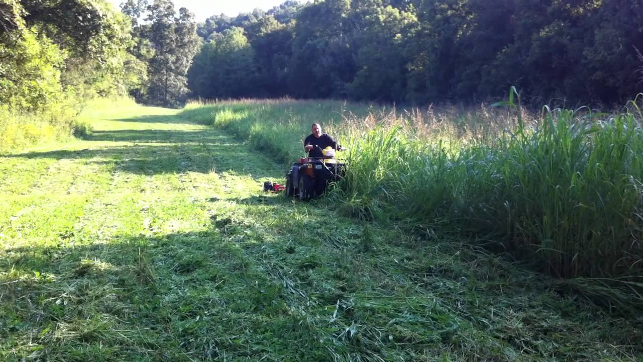 Are Oats Good For Food Plots