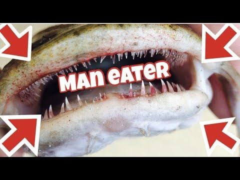 UNBOXING *ASIAN* FISH SHIPMENT MAN-EATING CATFISH