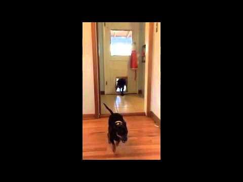 Bruce the Batdog Escapes!